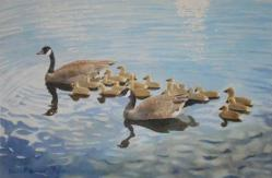 Family--PapaMamaand19Goslings-20x13-180506.jpg